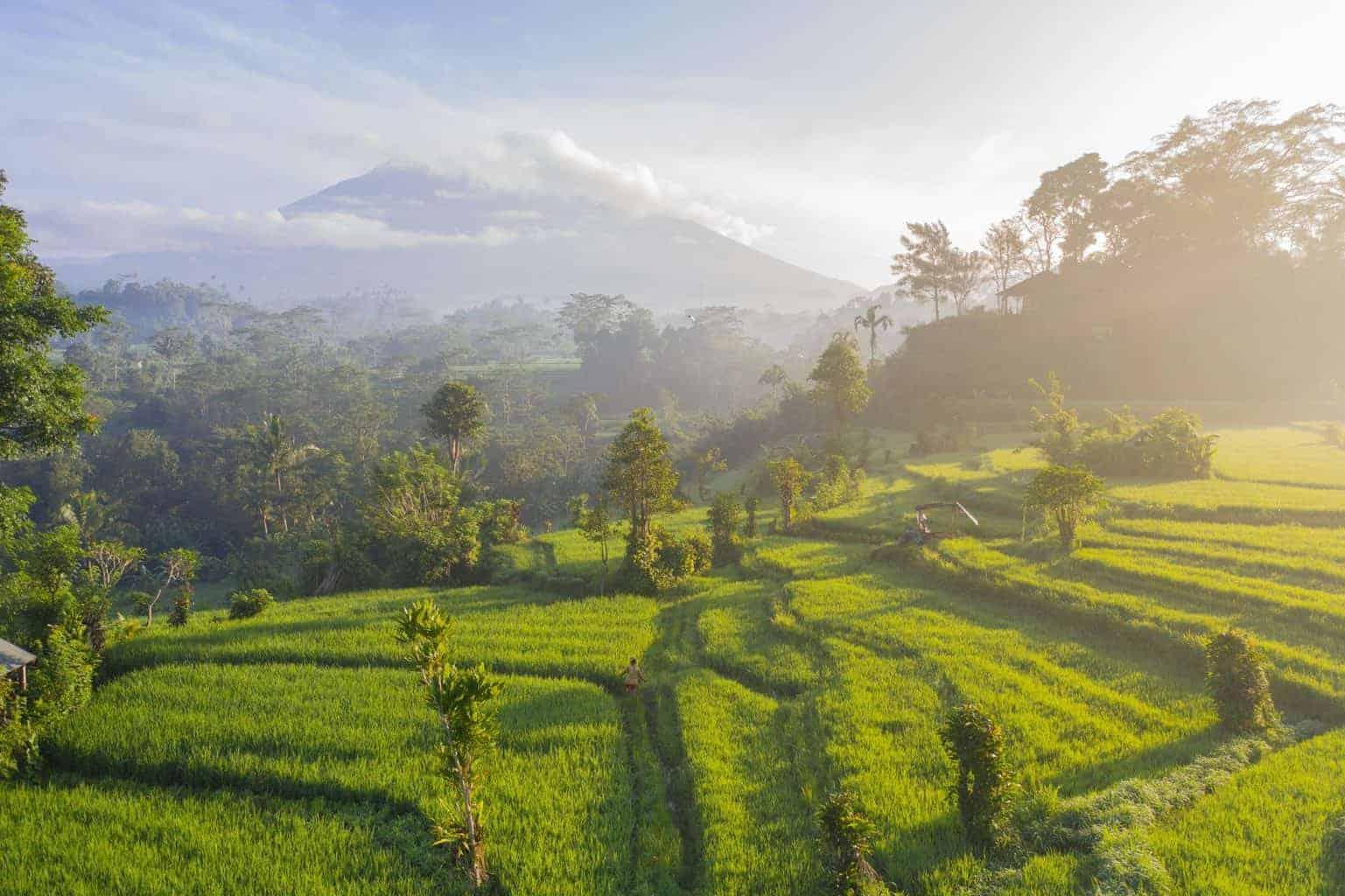Bali for Digital Nomads