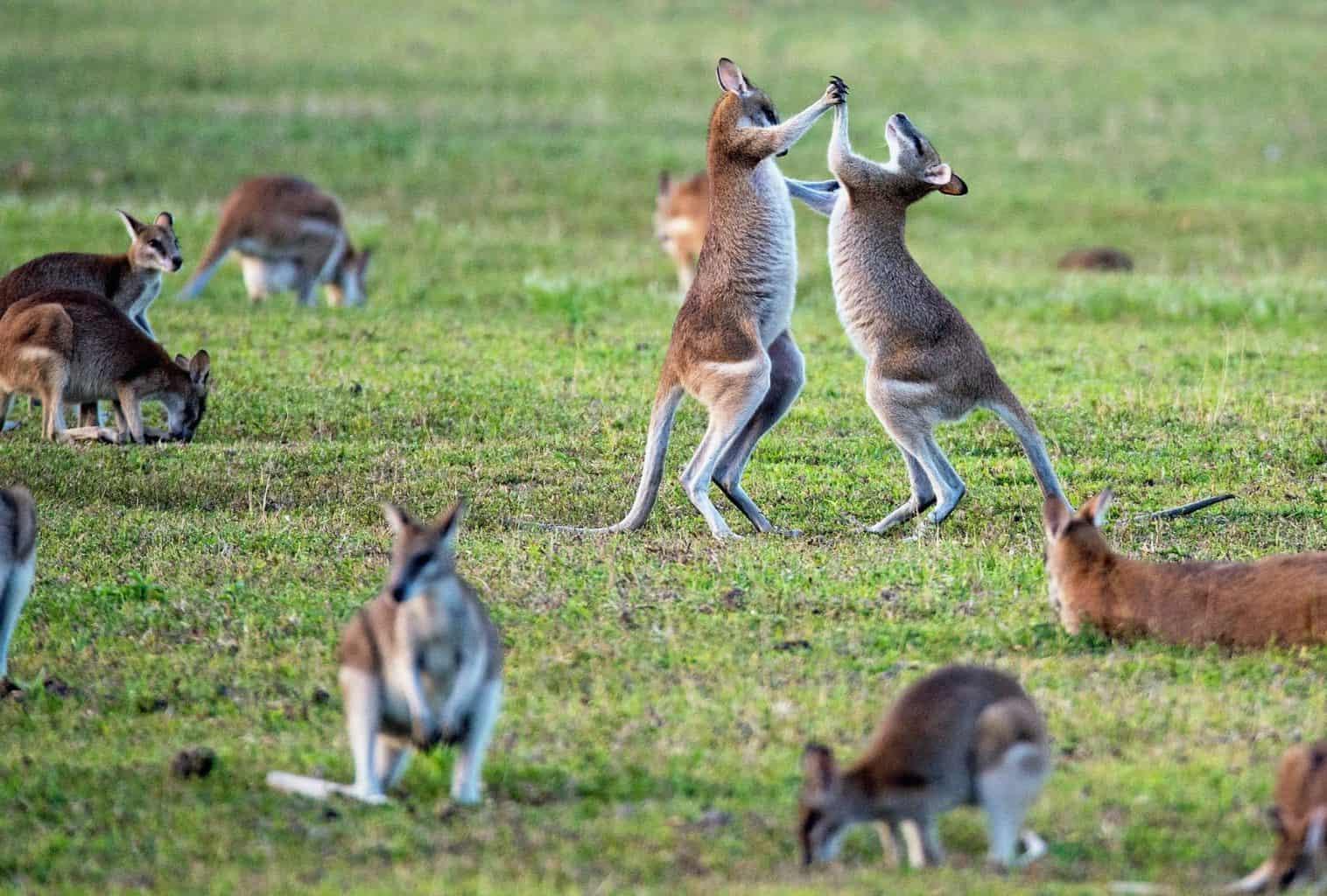 Jessica's adventure in Australia