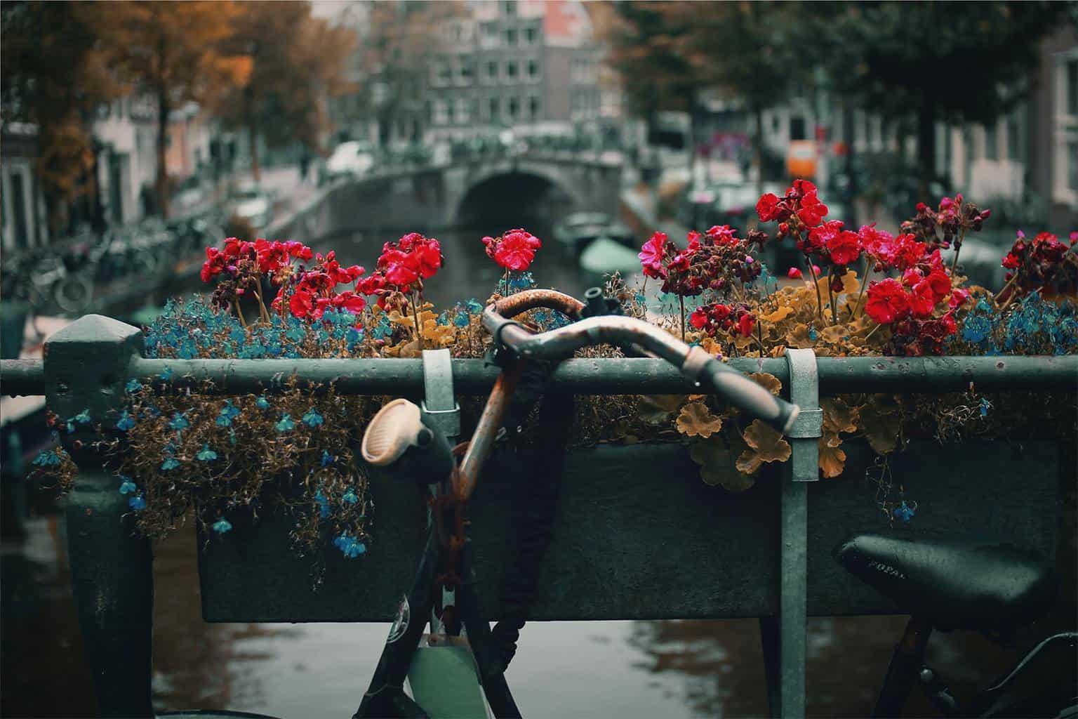Amsterdam For Locals